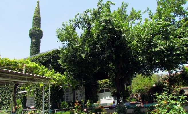 An ivy-clad Green Mosque in south-eastern Turkey