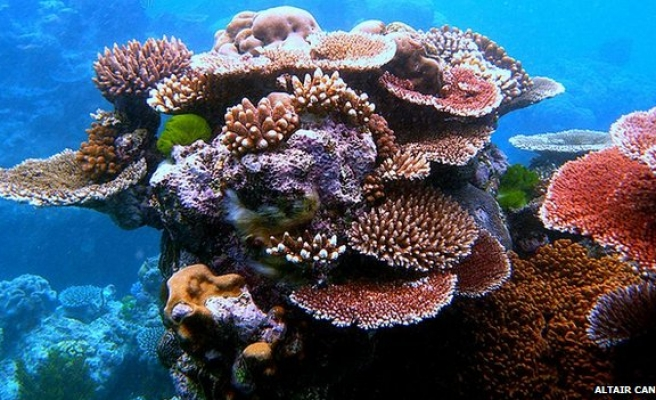 Caribbean coral reefs 'could vanish in 20 years'