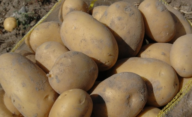 Sewing needles found in Canadian potatoes