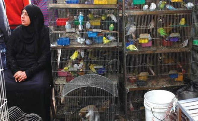 Woman dies of H5N1 bird flu in Egypt