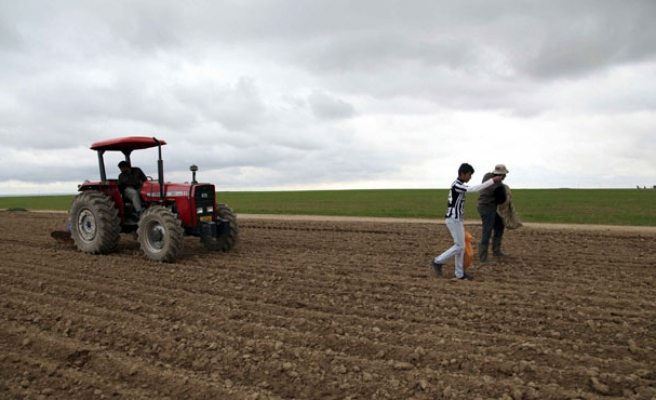 Israel spraying herbicides on Gaza farmlands: official