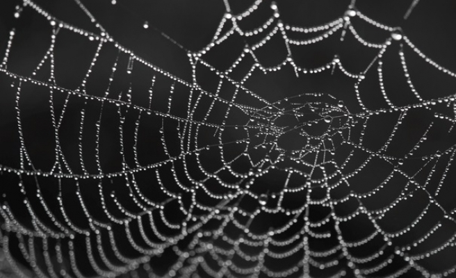 Strongest known natural material - spider silk or limpet teeth?