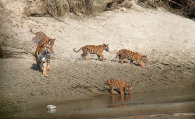 Nepal's successful fight to save its wildlife