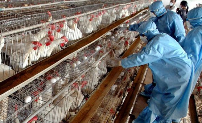 H5N8 bird flu strain found in Indiana