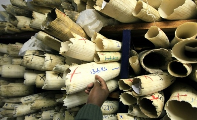 Ivory bound for Egypt seized in South Sudan