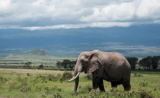 Kenyans begin trek to South Africa to save elephants