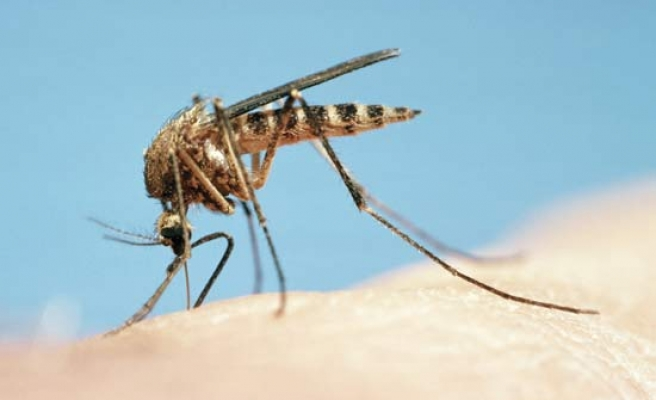 Florida facing threat from two mosquito-borne diseases