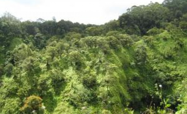 Congo villagers look to Copenhagen to save forest