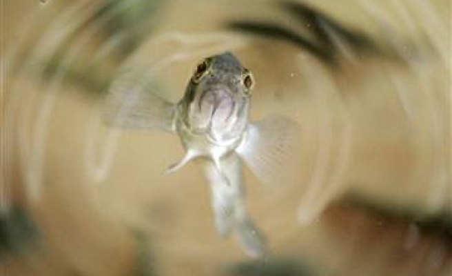 Sound may teach fish to catch themselves