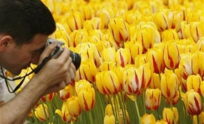 Turks revive glory of tulips from Istanbul
