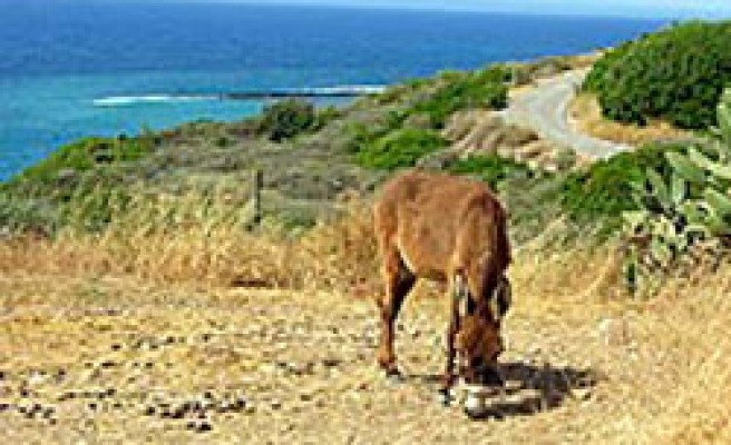 Greek,Turkish Cypriots united for donkey campaign