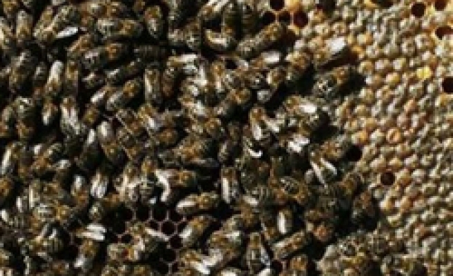 Commercially bred bees spread disease to wild bees