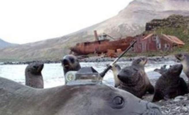Elephant seals join fight against climate change / PHOTO
