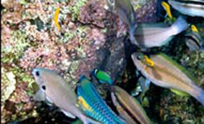 Fish digestions help keep the oceans healthy