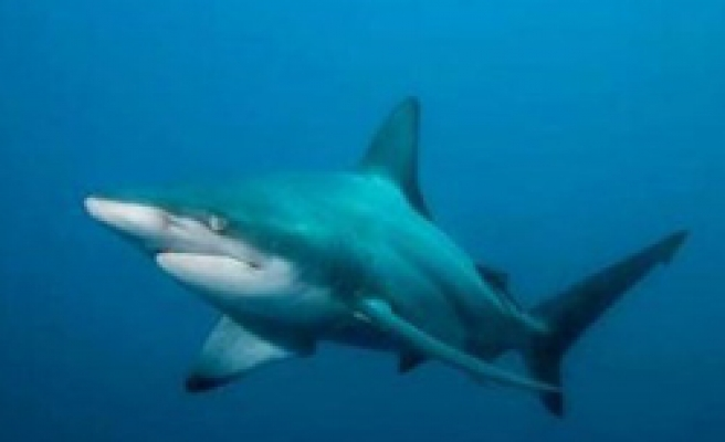 Sharks bits and kills surfing man in Florida