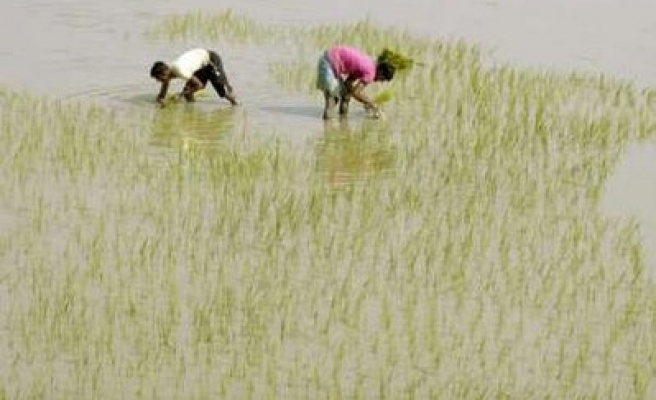 India farmers protest use of dam water for industry
