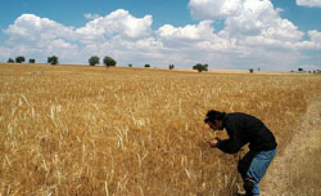 Turkey to spend 5.6 bln TL for agriculture in central Anatolia