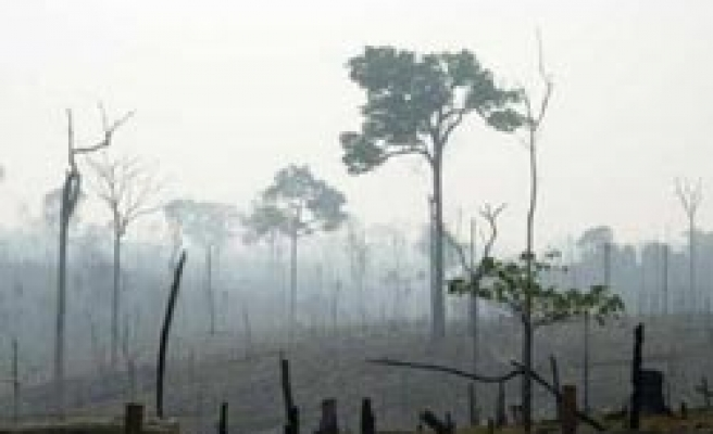 Peru says deforestation on the rise, up 80 pct from 2001