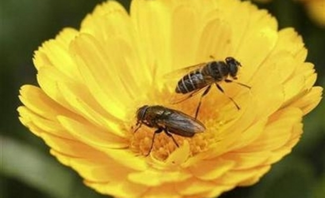 Scientists examine cause of bee die-off