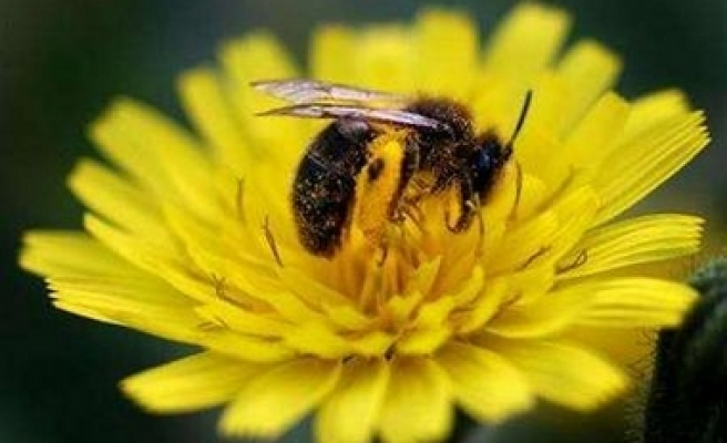 Honey bee scientists meet in Turkey for int'l conference