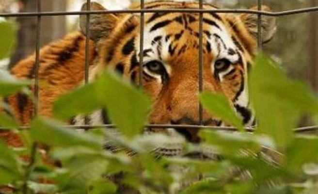 Tigers may disappear in half of Indian reserves