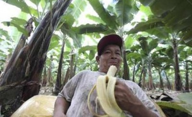 Latin America, Africa initial banana deal with EU, US