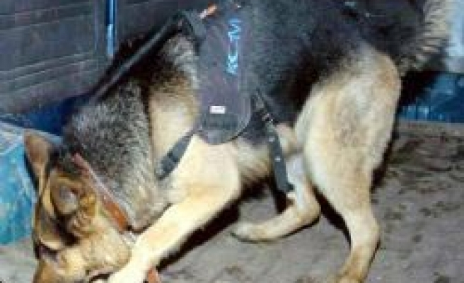 Sniffer dogs help Turkish police confiscate heroin