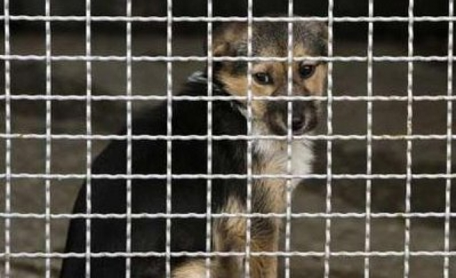 Pack of stray dogs kills 13 animals in Bulgarian zoo