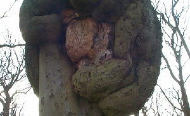 Buried 'Aliens' Are Really Tree Trunks