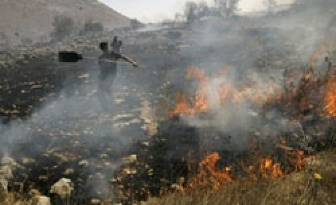 Israeli setlers set fire Palestinian trees in West Bank riot / PHOTO