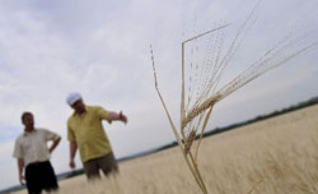 Russia cuts 2010 grain crop forecast over drought