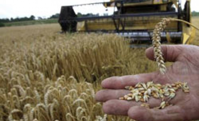 Egypt wheat stocks dwindle, sufficient for 89 days