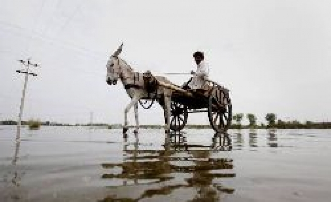 Donkeys come to the rescue in Pakistan floods-PHOTO