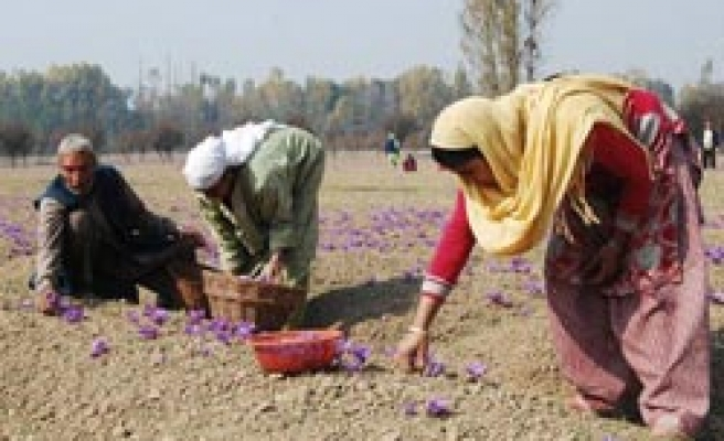 Indian farmers driven to suicide as hail ruins crops