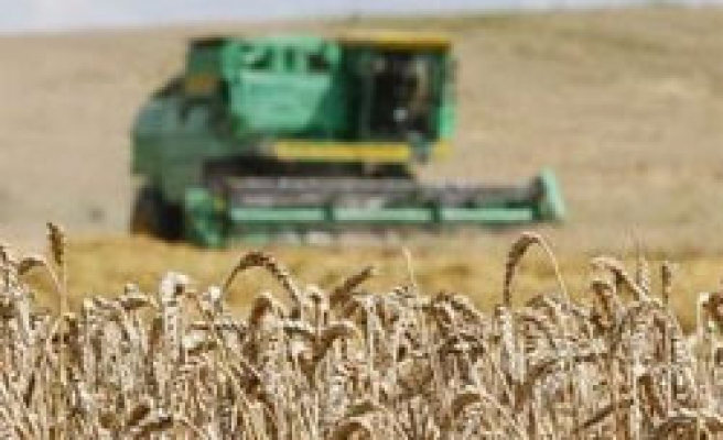 Pakistan likely to scrap wheat exports on floods