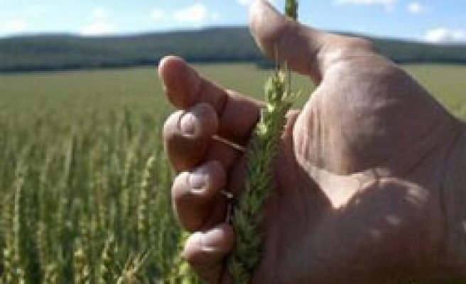 Qatar launching initiative for food security in arid nations