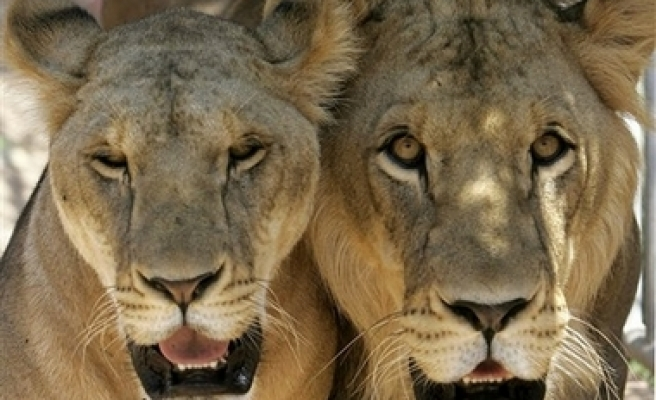 Zimbabwe to 'indigenize' private wildlife sanctuary