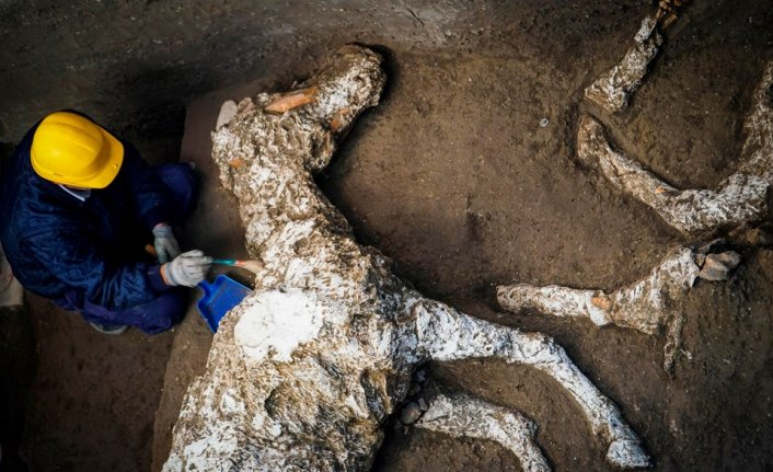 Harnessed horse unearthed in ancient stable near Pompeii