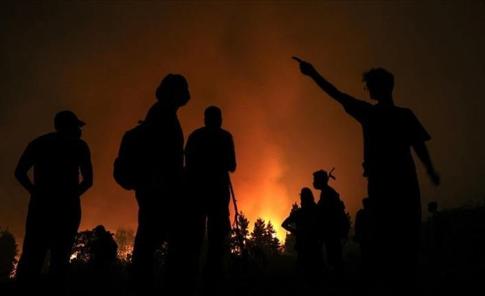 Death toll from Algeria forest fires rises to 65