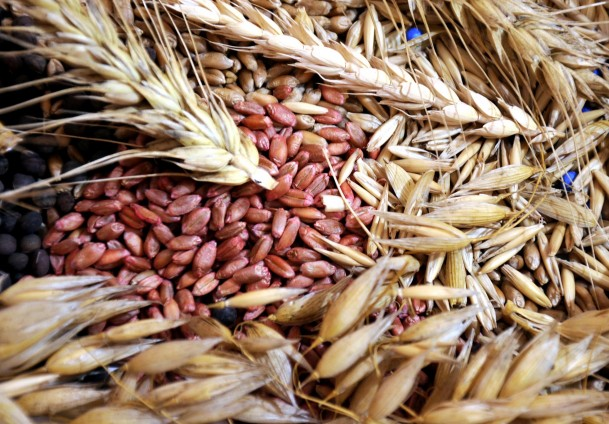 Turkey's agricultural exports up