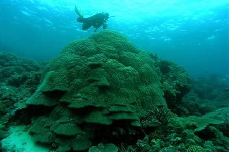 Storms to starfish: Great Barrier Reef faces rapid coral loss: study