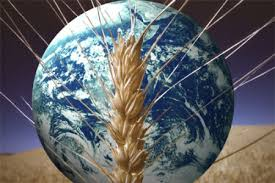 World Bank says global food prices fell again