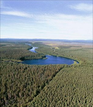 European forests near carbon saturation point: study