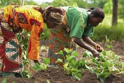 Kenya first to earn carbon credits from sustainable farming