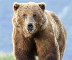700-Pound Grizzly Escapes Zoo in Ontario