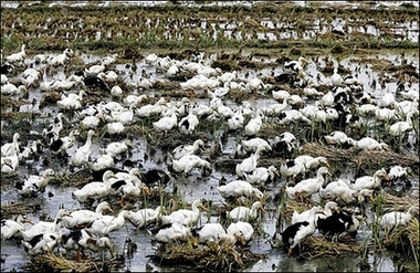 New type bird flu in China claims 43 lives