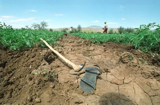 WHO warning over Ethiopia climate change risks