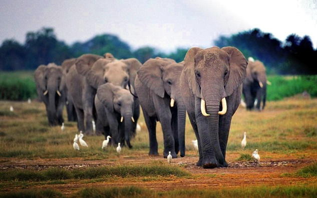 Myanmar introduces elephant protection plan