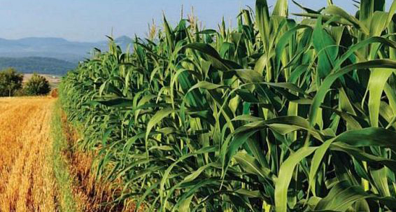 African agri-business 'needs investment'