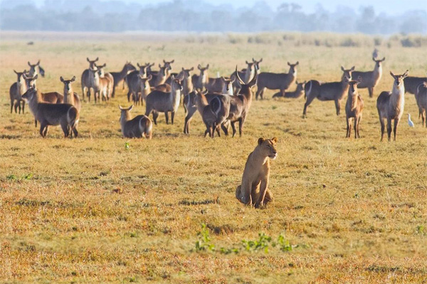 Conflict, drought threaten Mozambique's Gorongosa park